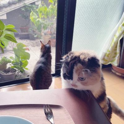 猫 ねこ 写真 画像