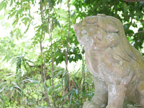 葛木御歳神社 みとしの森